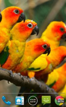 Birds Wallpapers screenshot 2