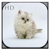 Cute Cat HD Wallpaper icon