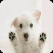 Cute dogs wallpaper icon