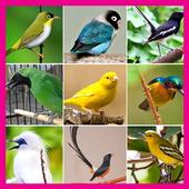 Kumpulan Master Kicau Burung icon