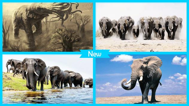 Elephant Wallpaper apk screenshot