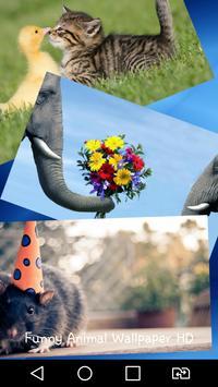 Funny Animal Wallpaper HD poster
