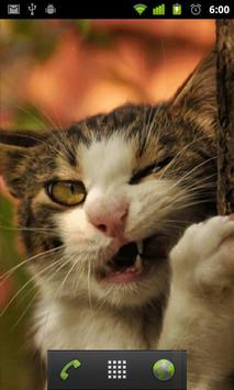 funny cat backgrounds apk screenshot