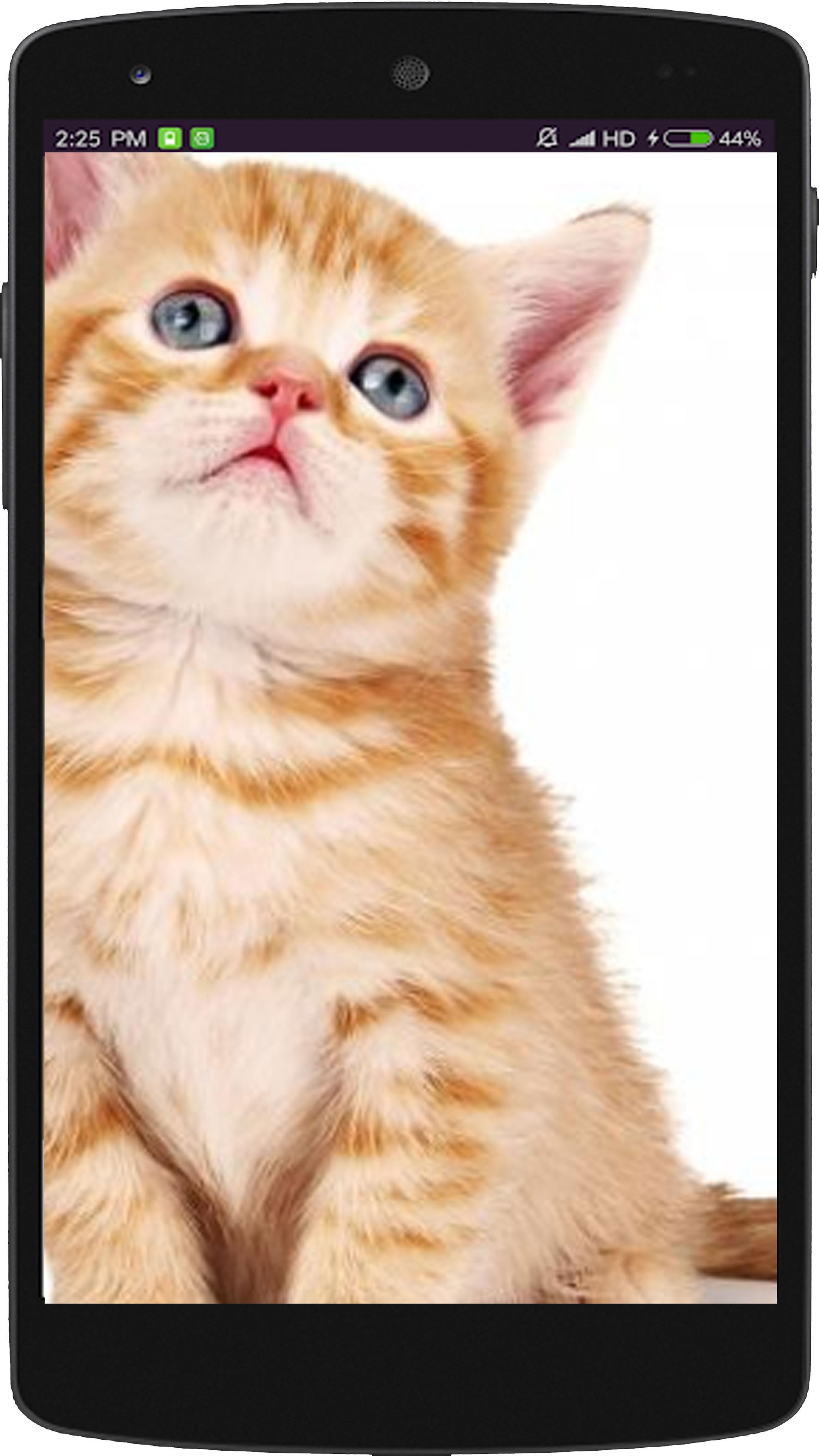 Gambar Kucing Full Hd godean.web.id
