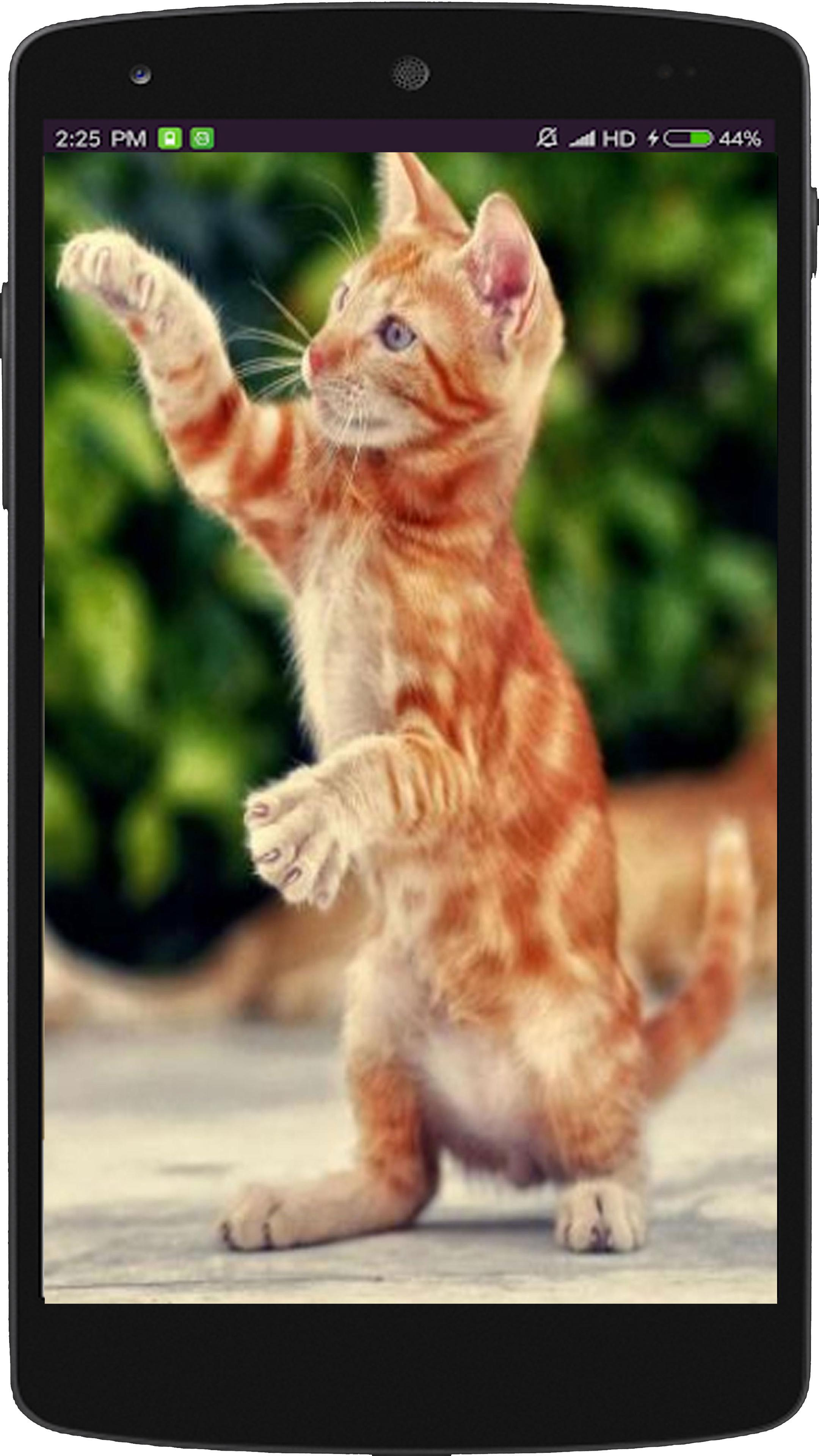 Funny Cat Wallpaper Hd For Android Apk Download
