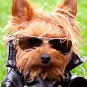 funny dog live wallpaper icon
