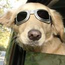 كلب مضحك Lwp APK