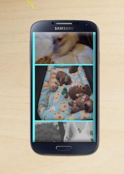 Смешные видео с животными apk screenshot