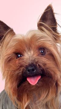 Yorkshire Terrier Wallpaper apk screenshot