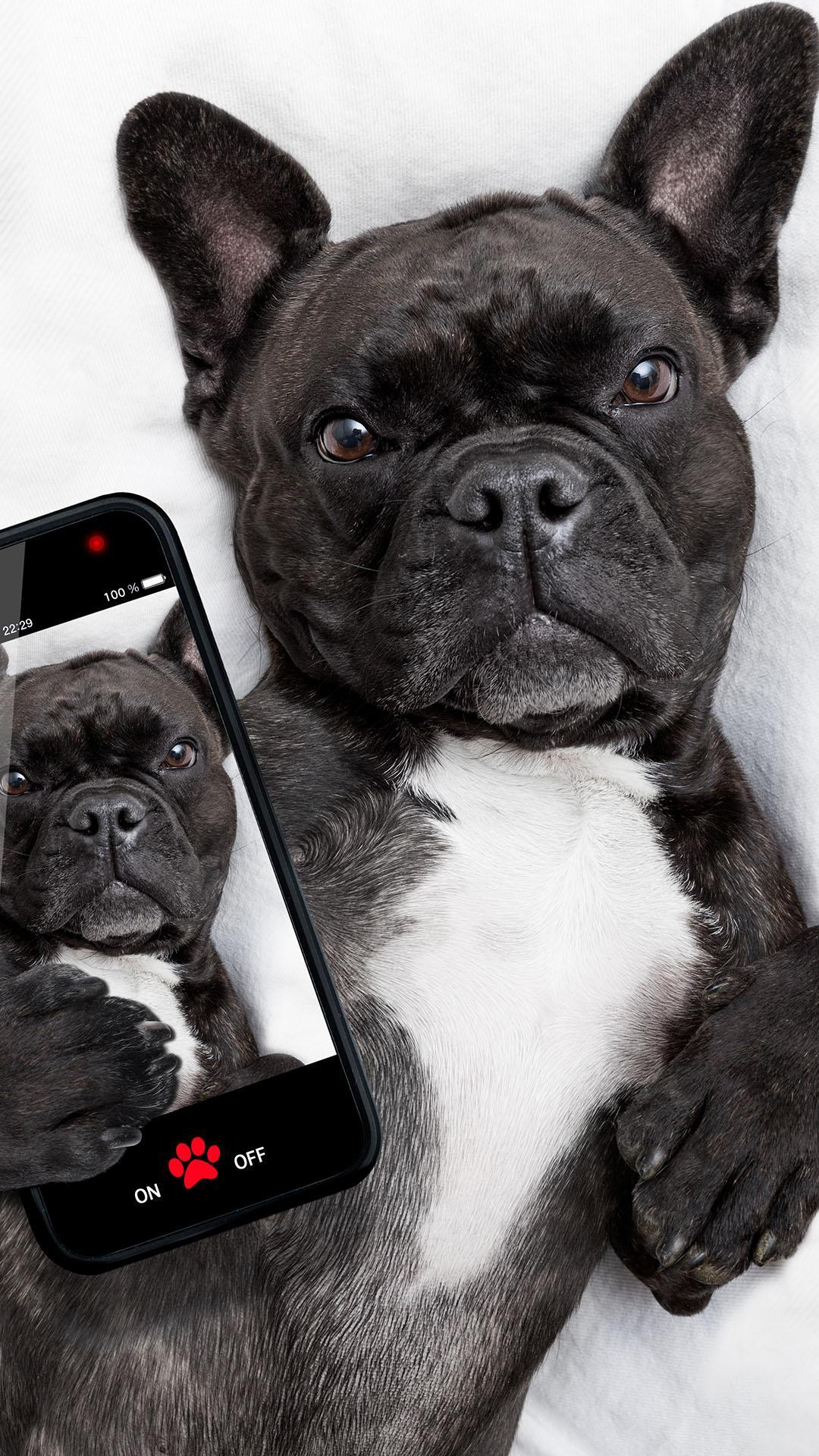 Bulldog Wallpaper For Android Apk Download