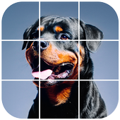 Rottweiler Tile Puzzle icon