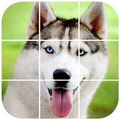 Siberian Husky Tile Puzzle icon