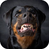 Dog Growling Sounds icon