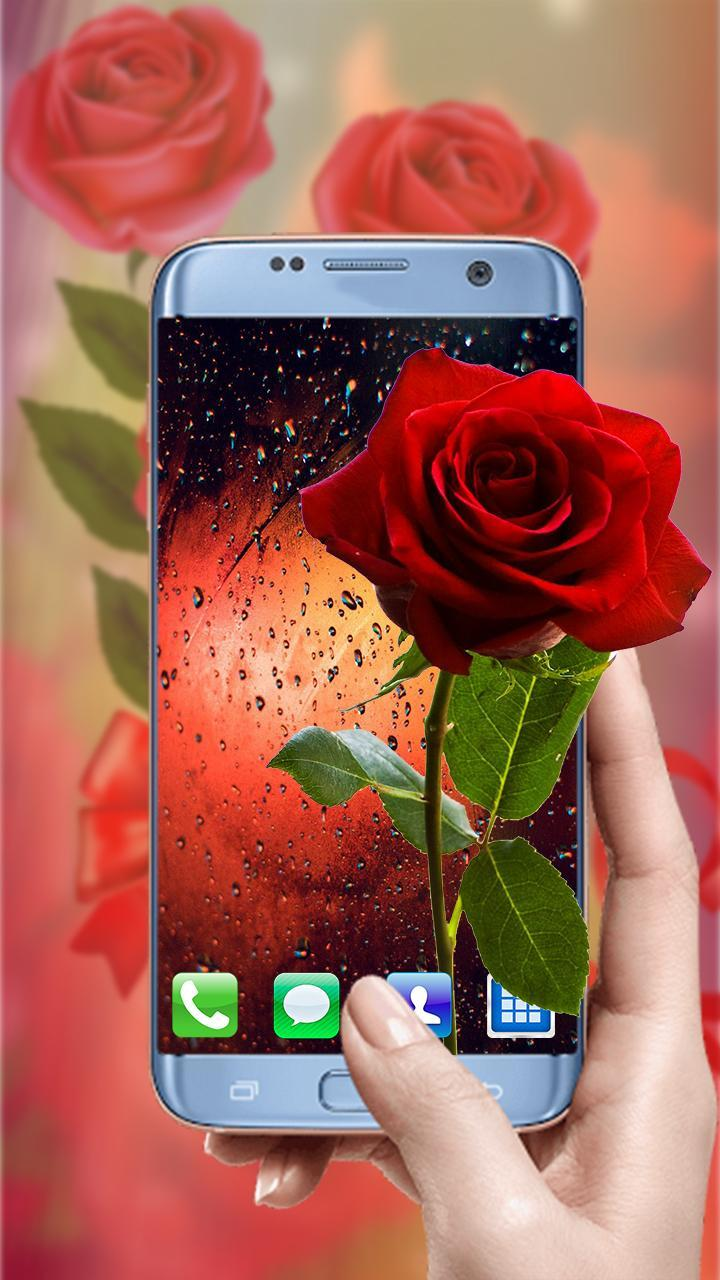 Rose Wallpapers Hd Beautiful Red Roses Pictures For Android