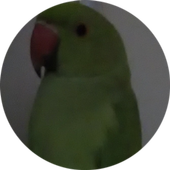 BirdsPhotoVideoAlbum icon