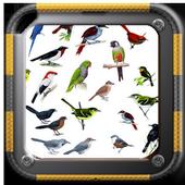 Cantos Pássaros Brasileiros icon