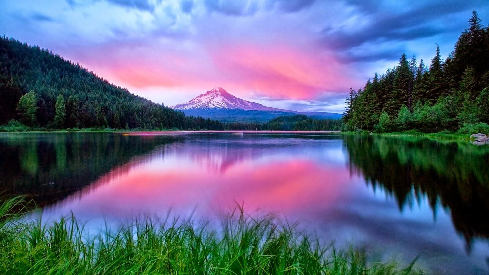 Nature Wallpapers And Images Hd For Android Apk Download