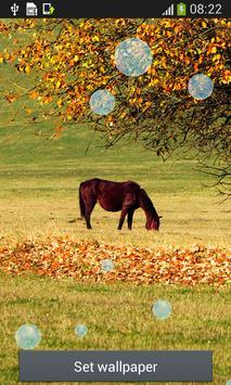 Horse Live Wallpapers apk screenshot