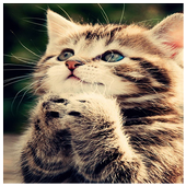 Kitty Cats Puzzle icon