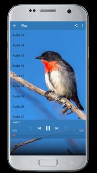 Master Kicau Burung Cabai screenshot 5