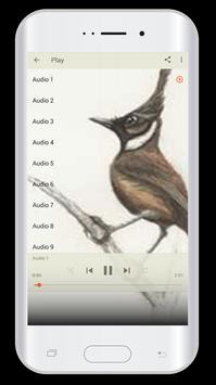 Master Kicau Burung Cililin screenshot 5
