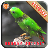 Master Kicau Burung Serindit icon