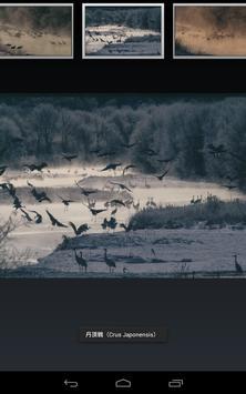 Red-crowned Crane(JP022) screenshot 4