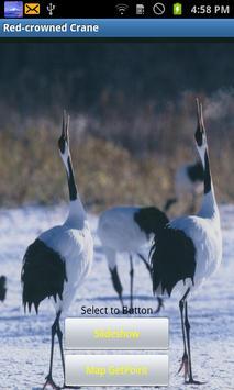 Red-crowned Crane(JP022) poster