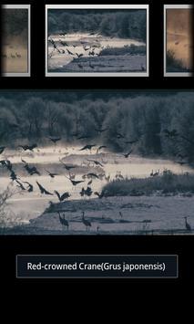 Red-crowned Crane(JP022) screenshot 1