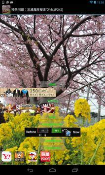 Japan:MiurakaiganCherry(JP242) poster
