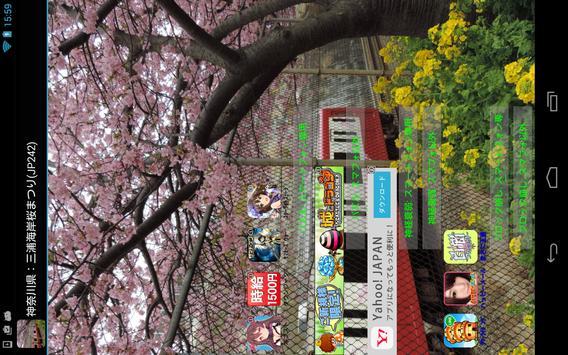 Japan:MiurakaiganCherry(JP242) screenshot 3