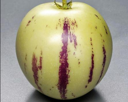 Solanum Muricatum Wallpaper apk screenshot
