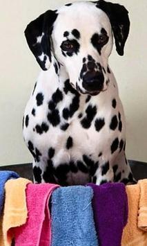 Dalmatian Jigsaw Puzzles poster