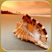 Seashell photo frames icon
