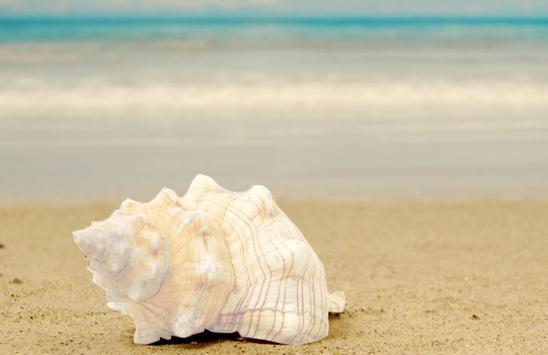 Seashell photo frames poster