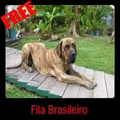 Fila Brasileiro icon