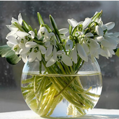 Snow Drops Jigsaw Puzzles icon