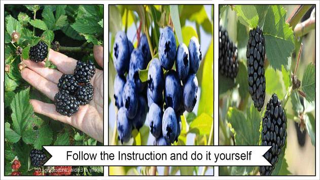 Easy DIY Grow Blackberry Plants in Pots screenshot 2
