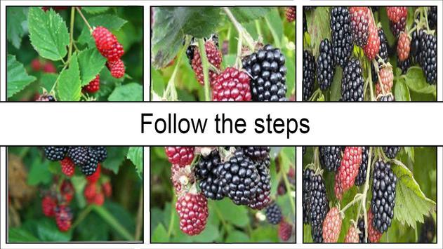 Easy DIY Grow Blackberry Plants in Pots screenshot 4