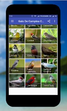 Tico Tico Offline apk screenshot