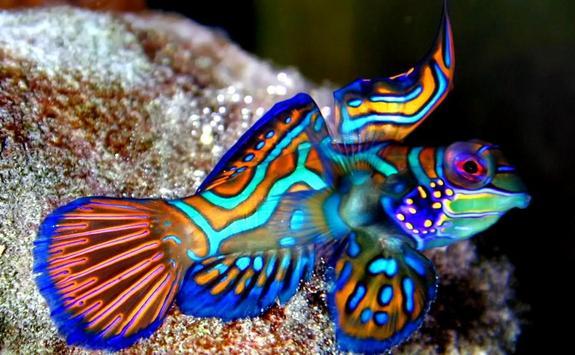 fish wallpaper hd screenshot 2