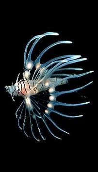fish wallpaper hd screenshot 3