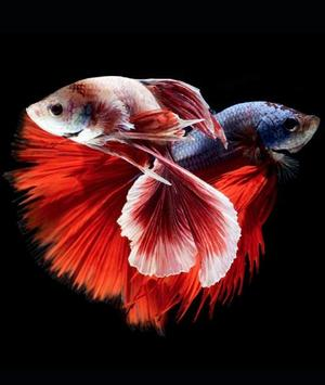 fish wallpaper hd screenshot 7