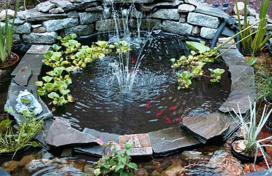 Fish Pond Design Ideas apk screenshot