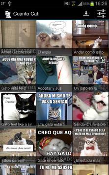 Cuanto Cat poster
