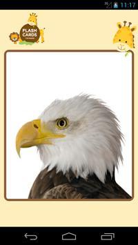 Sound FlashCard (bird) screenshot 13