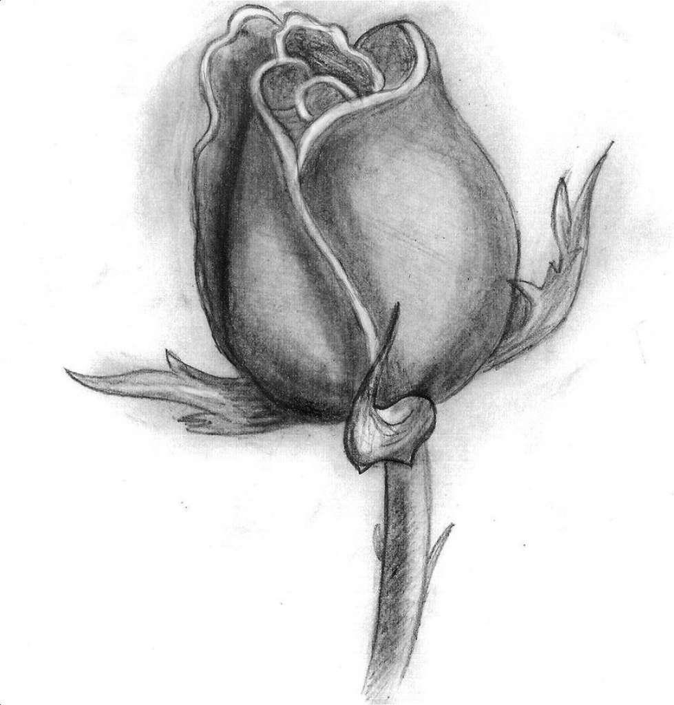 Вялый цветок рисунок