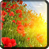 Flowers Wallpapers for Chat icon