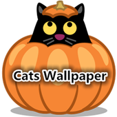 Cats Wallpapers icon