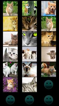 Cats Wallpapers poster